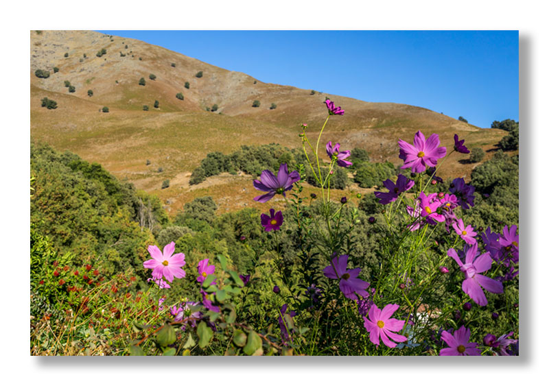 Flores en el Santuario de Chilla