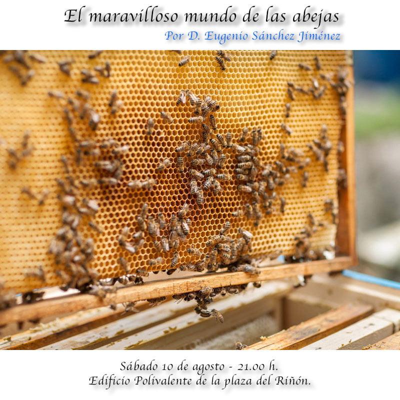 El maravilloso mundo de las abejas